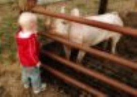 Enorme stijging agrarische kinderopvang