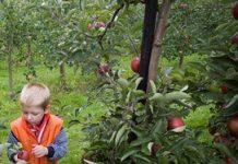 RIVM onderzoekt mogelijkheid Gezonde Kinderopvang