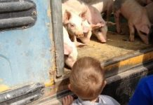 Blog Karin Westerbeek - Het land van de verschillen