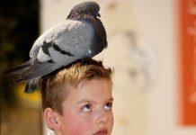 Vogelbescherming geeft gratis advies aan bso's