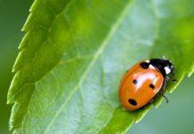 Thematafel insecten